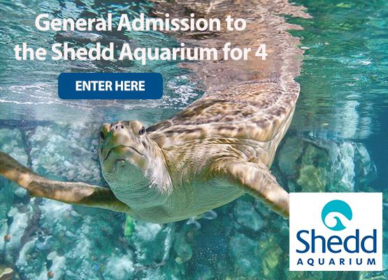 Shedd Contest