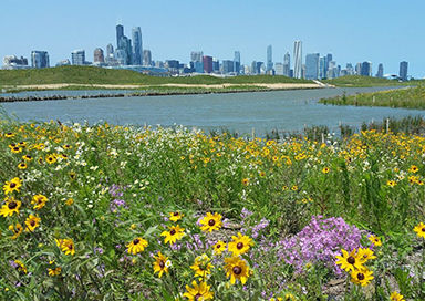 Northerly Island Prairie