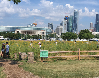 Northerly Island Summer Camp