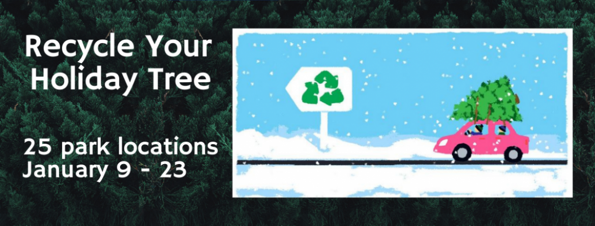 Recycle your holiday tree at 25 park locations, from January 9-23. Click here to view the list of parks.