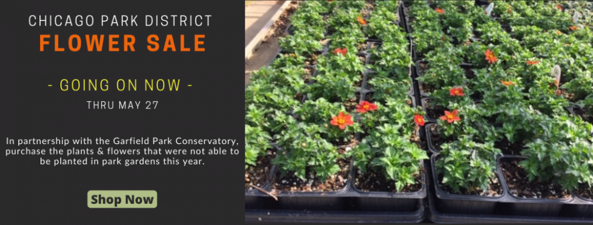 Chicago Park District flower sale going on now, through May 27.  Shop now.