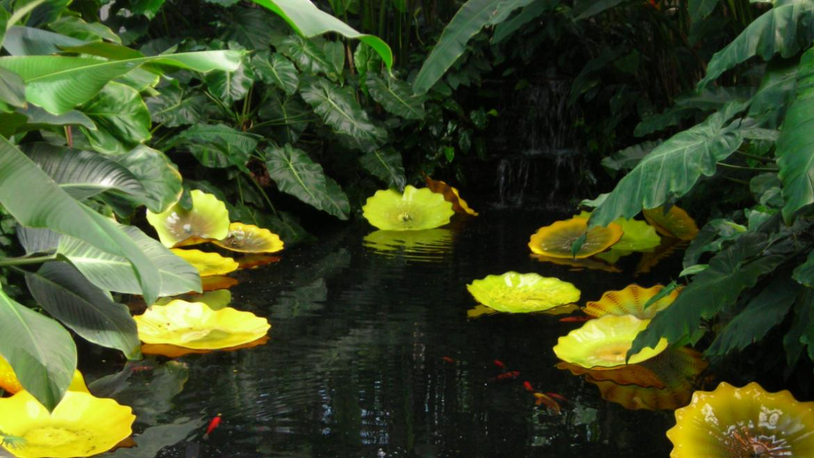 The historic water feature in Garfield Park Conservatory's Aroid House serves as the setting.