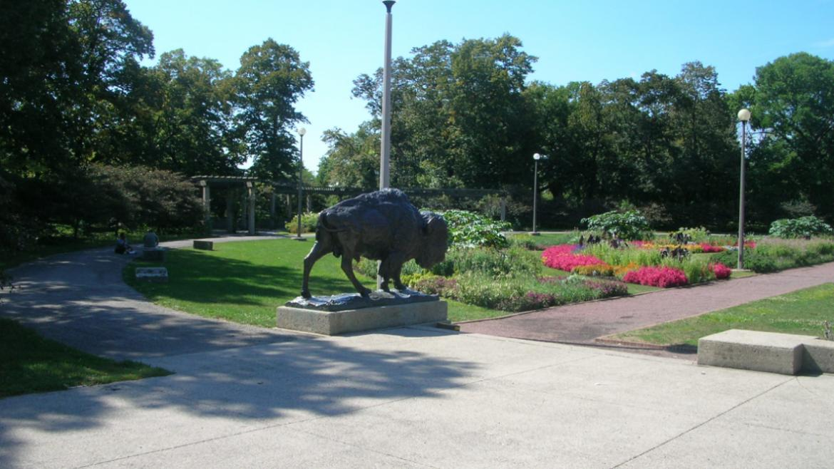 "View of male bison, which is nicknamed ""Prairie King,"" with the adjacent garden beds, 2007."