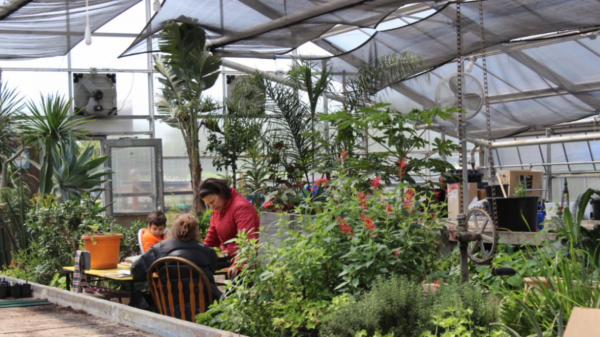 """The """"green"""" greenhouse at Kilbourn.Park Plant Sale"""