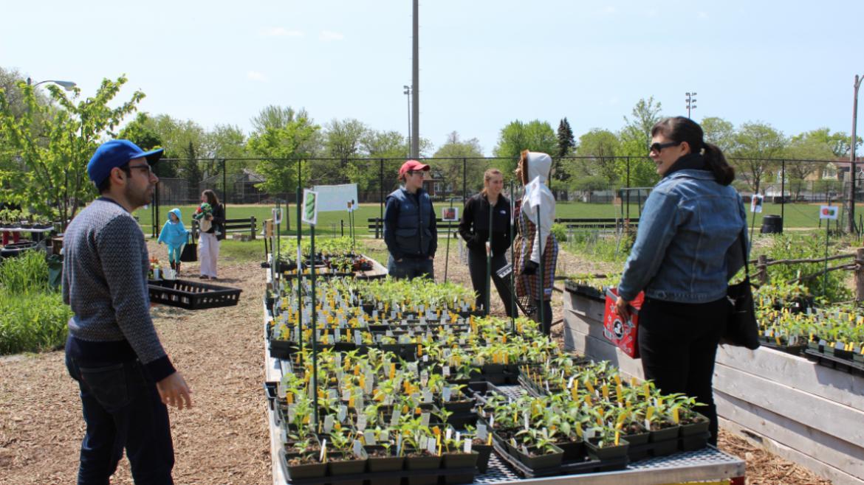 Peppers at Kilbourn Park plant sale.