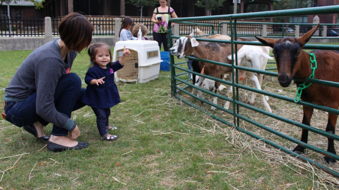Goats in the petting zoo at Pulaski
