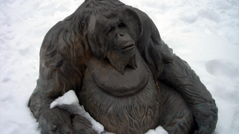 Tom Tischler's orangutan is entitled Man of the Forest, 2010.