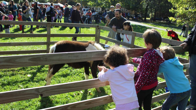 the kids love feeding the animals