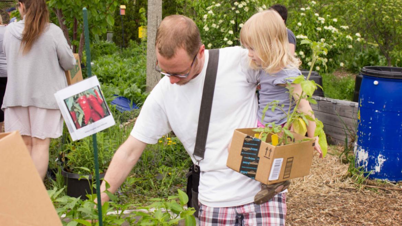 Shopping for seedlings at Kilbourn Plant sale