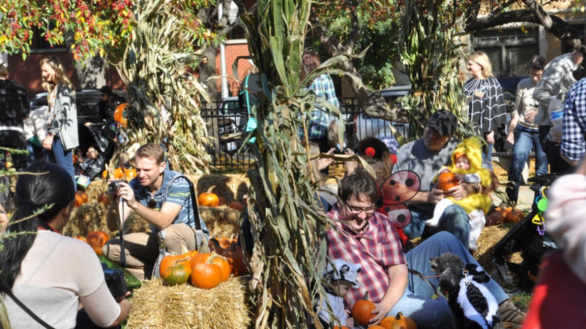 Visit various Chicago Parks now through Oct. 31 to pick your own pumpkin.