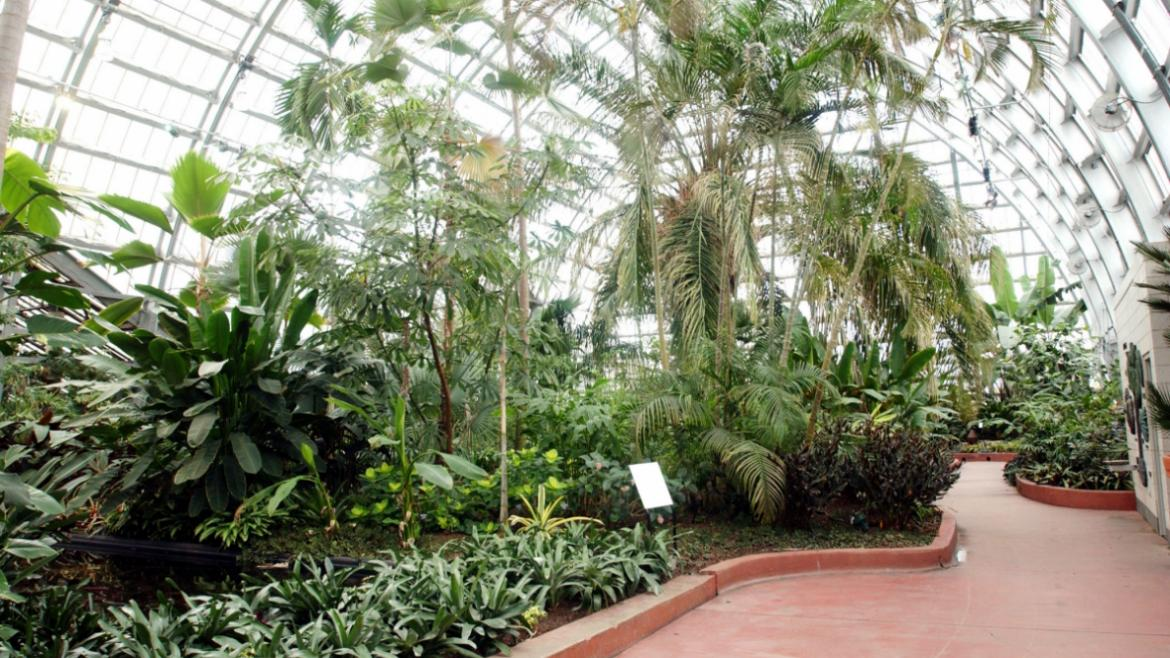 Garfield Park Conservatory Removes 93 Year Old Palm Tree To Promote New Plant Life Chicago Park District