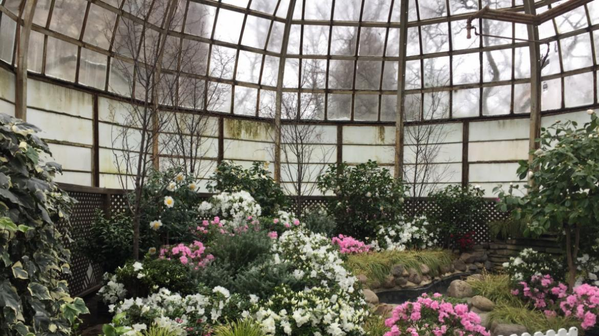 Spring Flower Shows are the Garfield and Lincoln Park Conservatories are open through May 10.