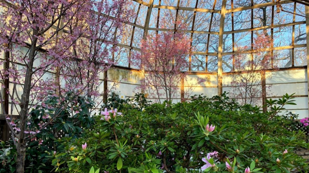 Spring Flower Show at Lincoln Park Conservatory is open through May 10, 2020.