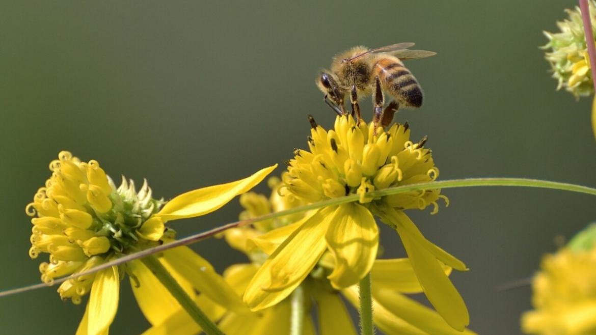 "The Chicago Park District is part of the ""Parks for Pollinators"" campaign."