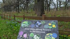 "A sign in the middle of a natural area reads ""Find these spring  flowers in the savanna"" surrounded by photos of different flowers."