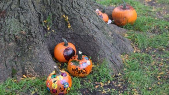 Pumpkin Fest at Unity