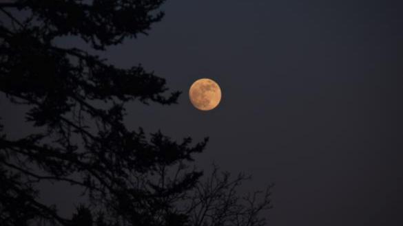 Nature-at-Night at NPV