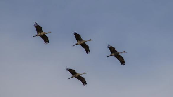 Fall Migration Bird Walks at NPV
