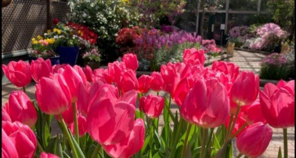 Spring Flower Show at Lincoln Conservatory