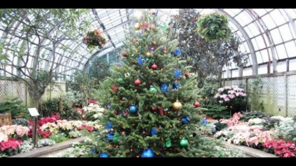 winter flower train show at lincoln park conservatory