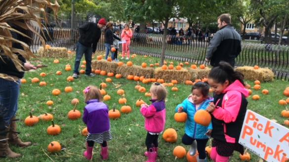 Our annual mini pumpkin patch!