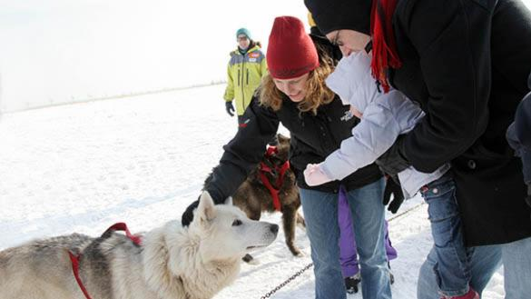 A family pets a Siberian Husky, in the snow, at Polar Adventure Days at Northerly Island.