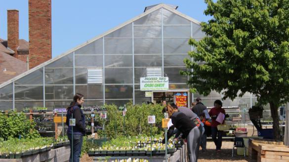 Organic Plant Sale at Kilbourn | Chicago Park District on green lavender, green gardening, green butternut squash, green beets, green bonsai, green tulips, green nature, green shrubs, green bushes, green perennial, green garden design, green flowers,
