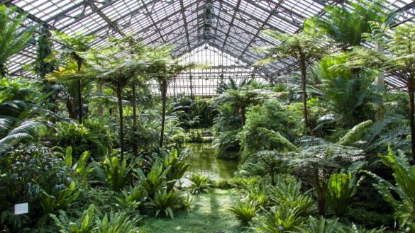 conservatories greenhouse chicago park district