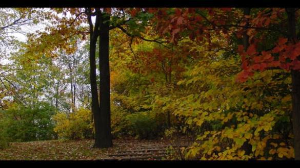 Columbus Park Woodland