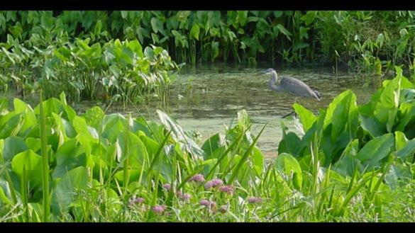 Gompers Park Wetland