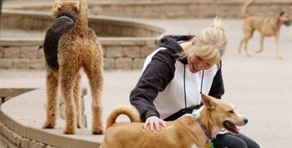 Margate Park Dog Friendly Area