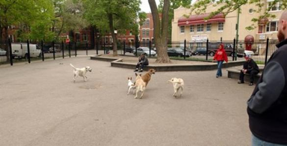 Wicker Park Dog Friendly Area