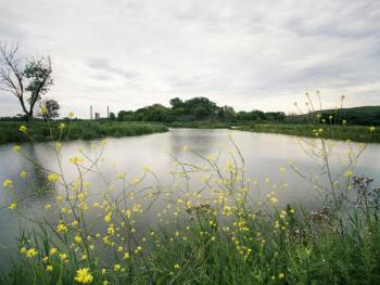 A picturesque view of the lagoon and natural plantings at Big Marsh
