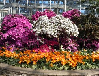 The Garfield Park Conservatory Spring Flower Show runs through May 13.