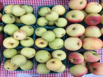 Apple Tasting and Skillet Apple Crumble at Skinner