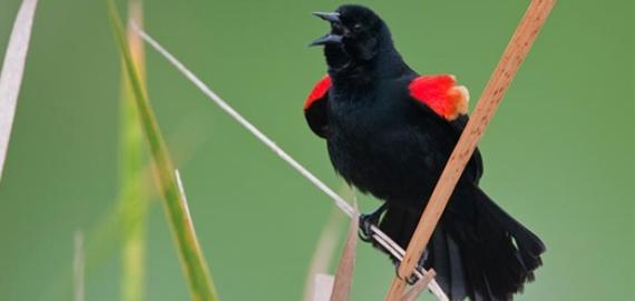 Big Marsh birding area