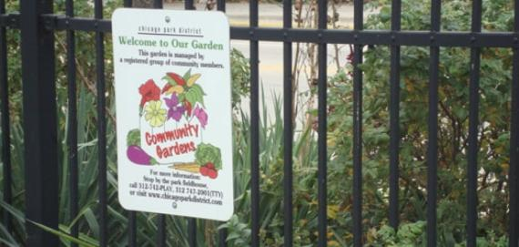 Get involved in the community garden at Churchill Park.