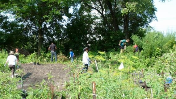 Cornell Oasis Community Garden