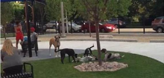 Park No. 569 dog park