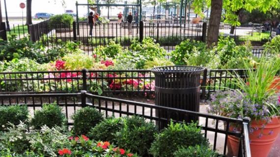 Lake Shore Park Community Garden