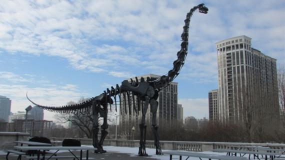 Brachiosaurus Replica