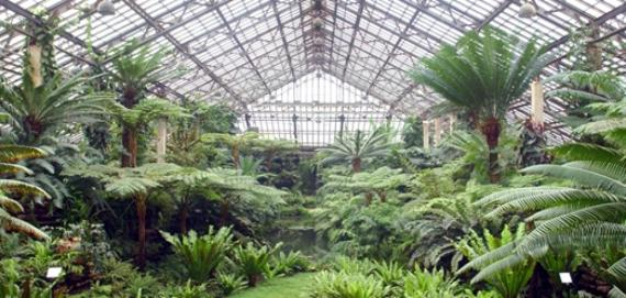 The Garfield Park Conservatory