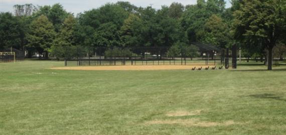 Ogden Park Field