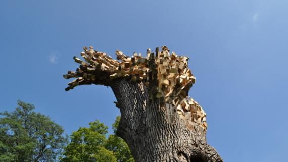Tree branches cut into wooden blocks and stuck back on to a tree giving the appearance that the tree is pixilating.