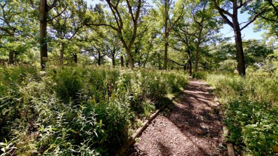 West Pullman Natural Area