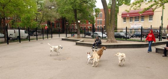 The dog-friendly area at Wicker!