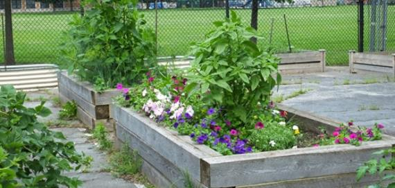 Flowers blooming in Gage Park's garden
