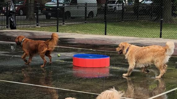 Doggie Pool Party at Rosedale Park