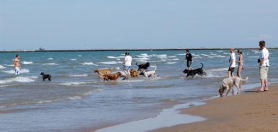 Montrose Beach | Chicago Park District