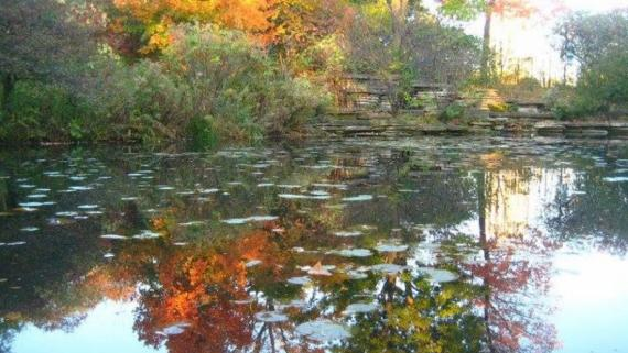Fall day at Caldwell Lily Pond in Lincoln Park